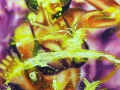 Lila 2019 · Acryl auf Leinwand · 100x80 cm
